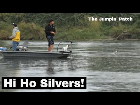 The Jumpin' Patch (Salmon jumping on the Snohomish River)