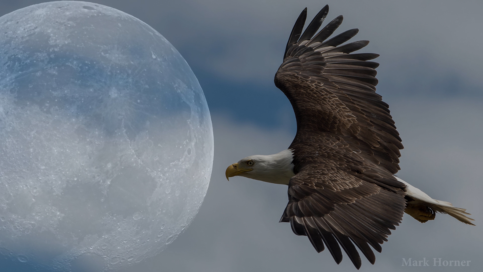 Record-setting amateur astronomer now a rising star in Bald Eagle photography