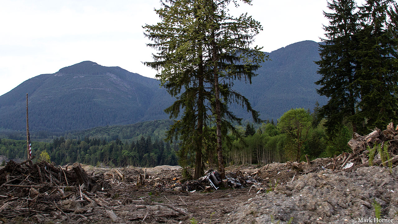 May 15th photos: Oso mudslide