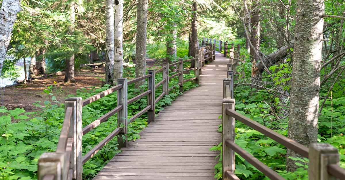 A wooden bridge with railings in a forest setting.